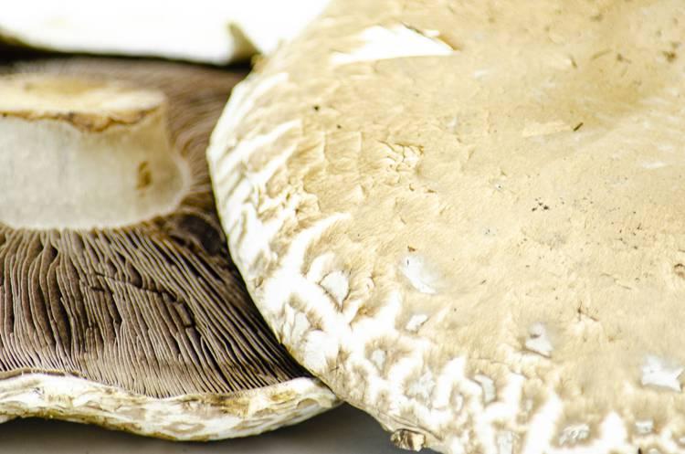 Funghi Portobello - Az. Agr. Begnoni
