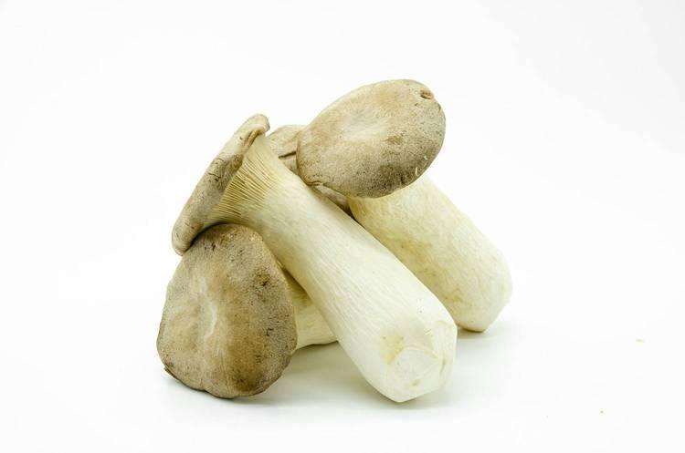 Funghi Cardoncelli  - Az. Agr. Begnoni
