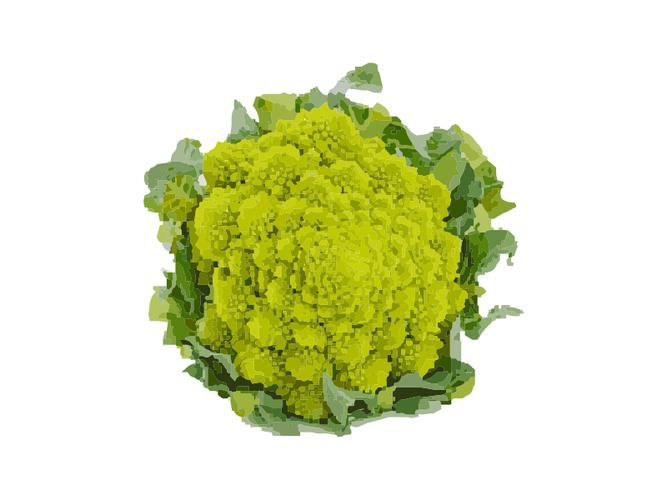 Cavolo Broccolo Romanesco  - Az. Agr. Zanchi