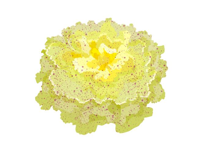 Radicchio variegato - Az. Agr. La Maldura